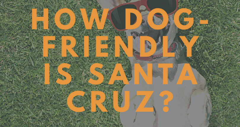 It's a Dog's Life – Life With A Dog In Santa Cruz County